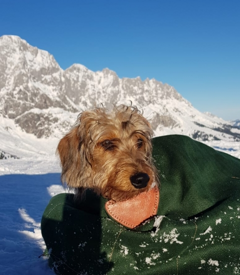 Alpenhaus Katschberg - Urlaub mit Hund
